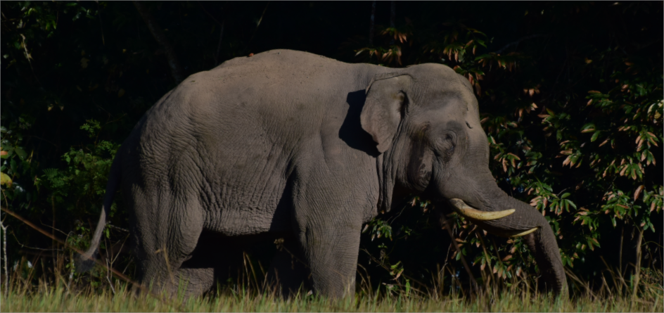 ช้าง.png