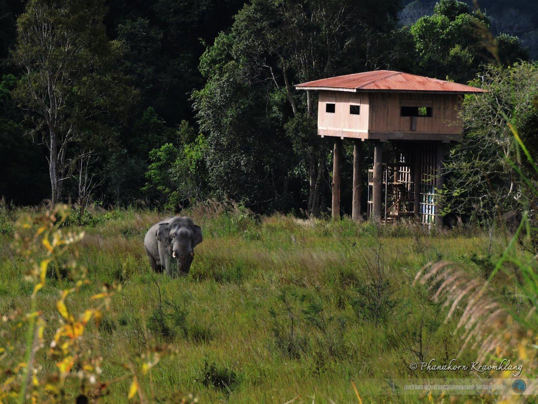 Copy of ช้างป่ากับหอดูสัตว์หนองผักชี (1).jpg