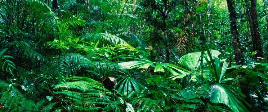Tropical_Rain_Forest.jpg