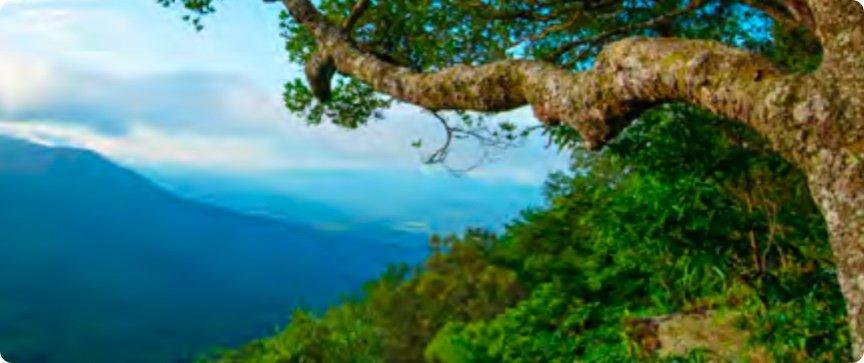 Lower_Montane_Rain_Forest.jpg