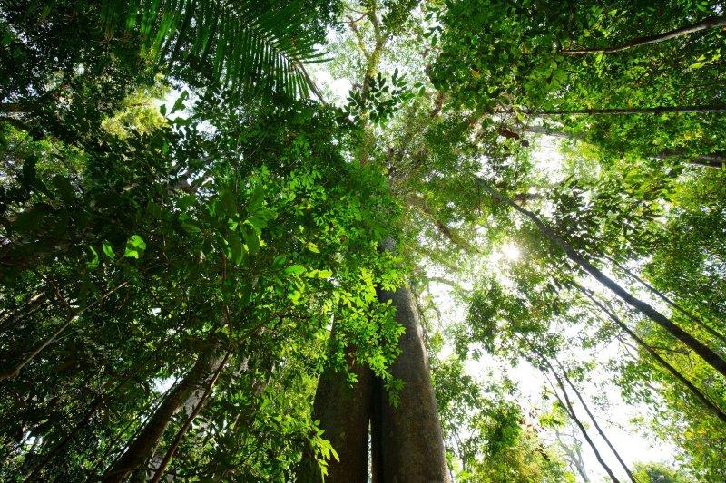 ป่าไม้ในอุทยาน
